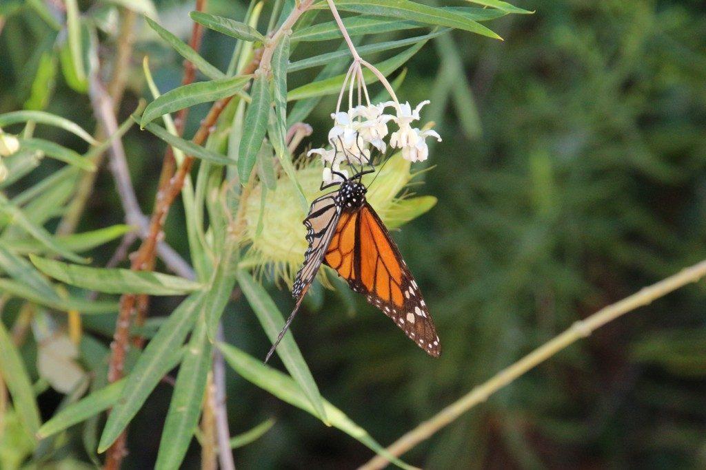 borboleta-site